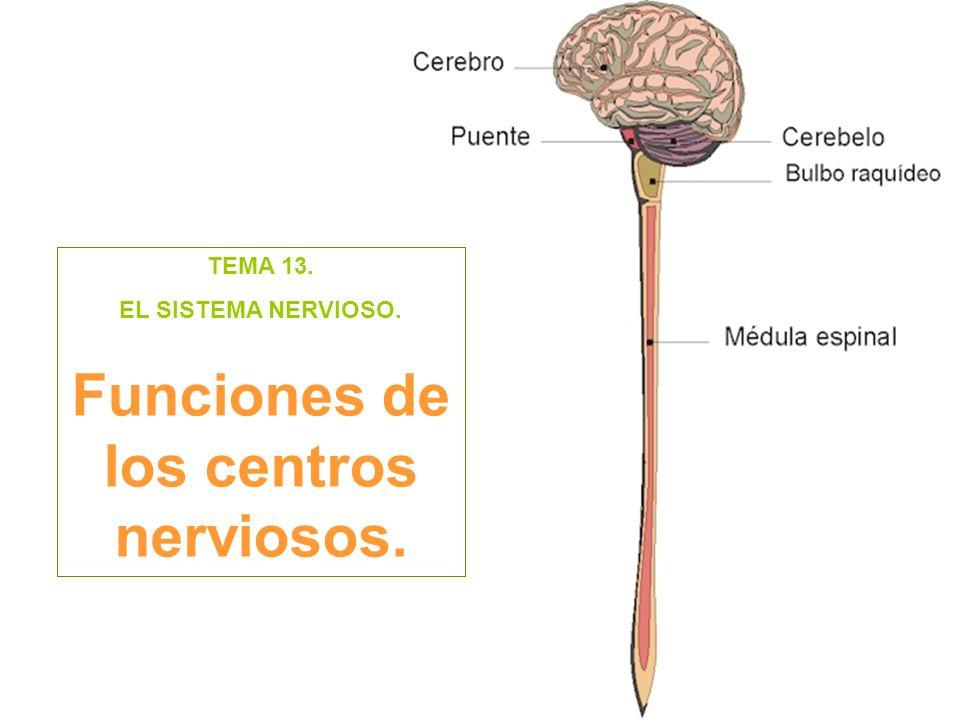 TEMA 13. EL SISTEMA NERVIOSO. Funciones de los centros nerviosos.