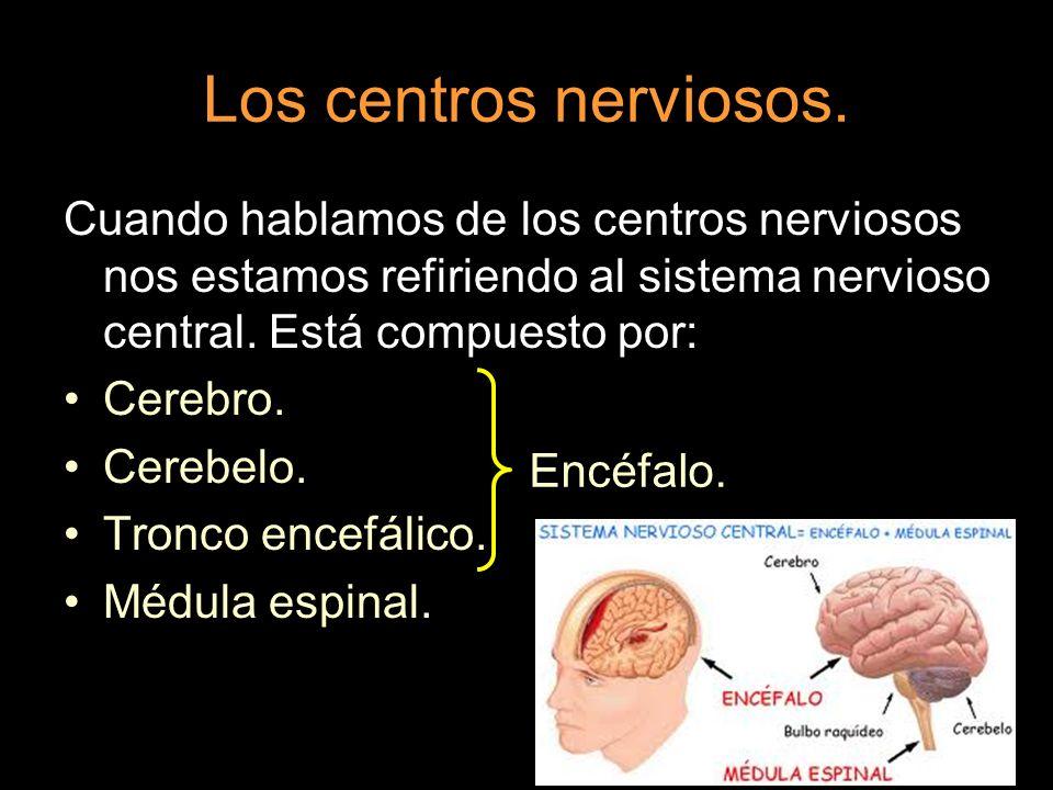 Los centros nerviosos. Cuando hablamos de los centros nerviosos nos estamos refiriendo al sistema nervioso central. Está compuesto por: Cerebro. Cereb