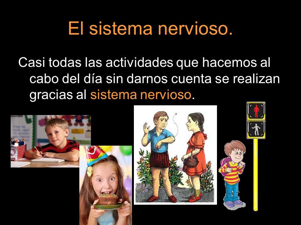El sistema nervioso. Casi todas las actividades que hacemos al cabo del día sin darnos cuenta se realizan gracias al sistema nervioso.