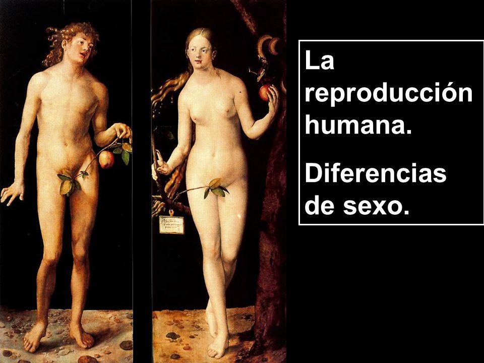 La reproducción humana. Diferencias de sexo.