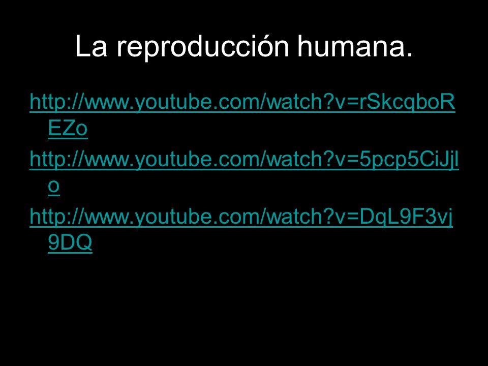 La reproducción humana. http://www.youtube.com/watch?v=rSkcqboR EZo http://www.youtube.com/watch?v=5pcp5CiJjl o http://www.youtube.com/watch?v=DqL9F3v