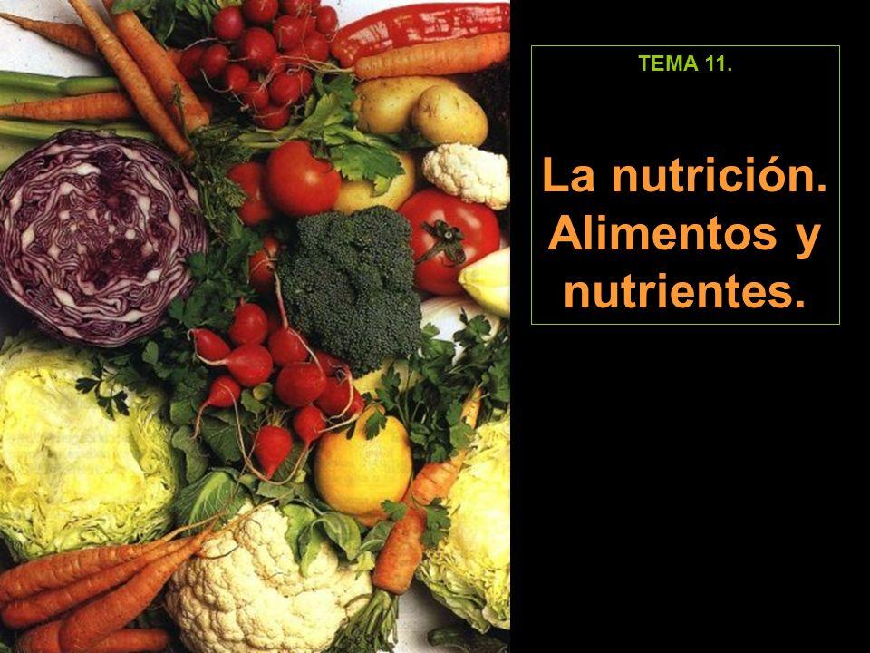 TEMA 11. La nutrición. Alimentos y nutrientes.
