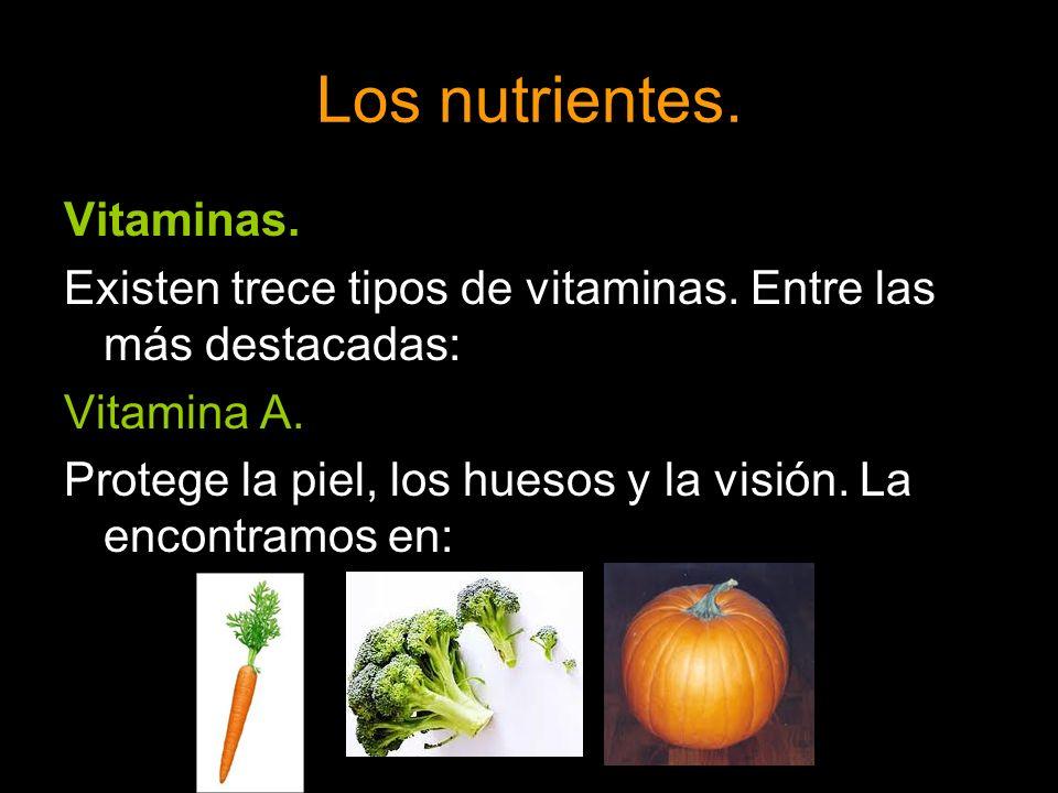 Los nutrientes. Vitaminas. Existen trece tipos de vitaminas. Entre las más destacadas: Vitamina A. Protege la piel, los huesos y la visión. La encontr