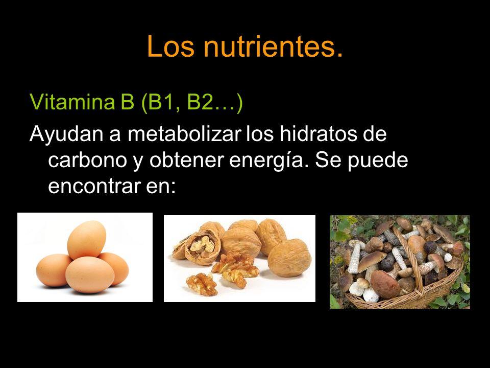 Los nutrientes. Vitamina B (B1, B2…) Ayudan a metabolizar los hidratos de carbono y obtener energía. Se puede encontrar en: