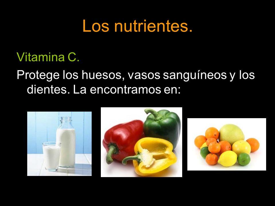 Los nutrientes. Vitamina C. Protege los huesos, vasos sanguíneos y los dientes. La encontramos en: