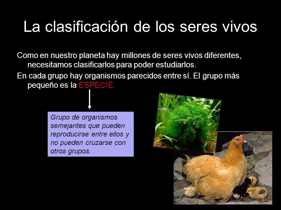 La clasificación de los seres vivos Como en nuestro planeta hay millones de seres vivos diferentes, necesitamos clasificarlos para poder estudiarlos.