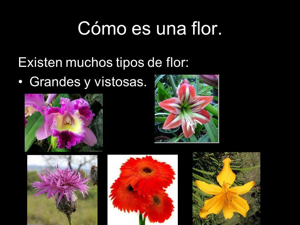 Cómo es una flor. Existen muchos tipos de flor: Grandes y vistosas.