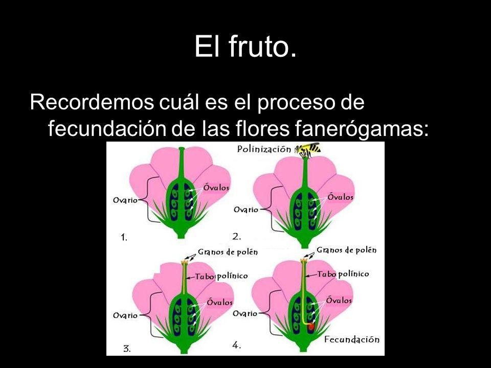 Los frutos pueden adquirir formas variadas: FRUTOS CARNOSOS: El pistilo se engrosa y se vuelve tierno y jugoso.