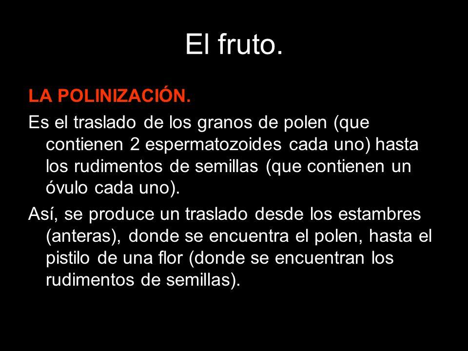 El fruto.LA FECUNDACIÓN: Es la unión de un espermatozoide y un óvulo en una planta fanerógama.