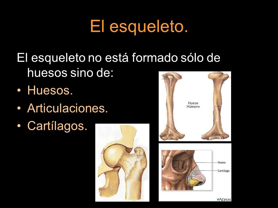 El esqueleto. El esqueleto no está formado sólo de huesos sino de: Huesos. Articulaciones. Cartílagos.
