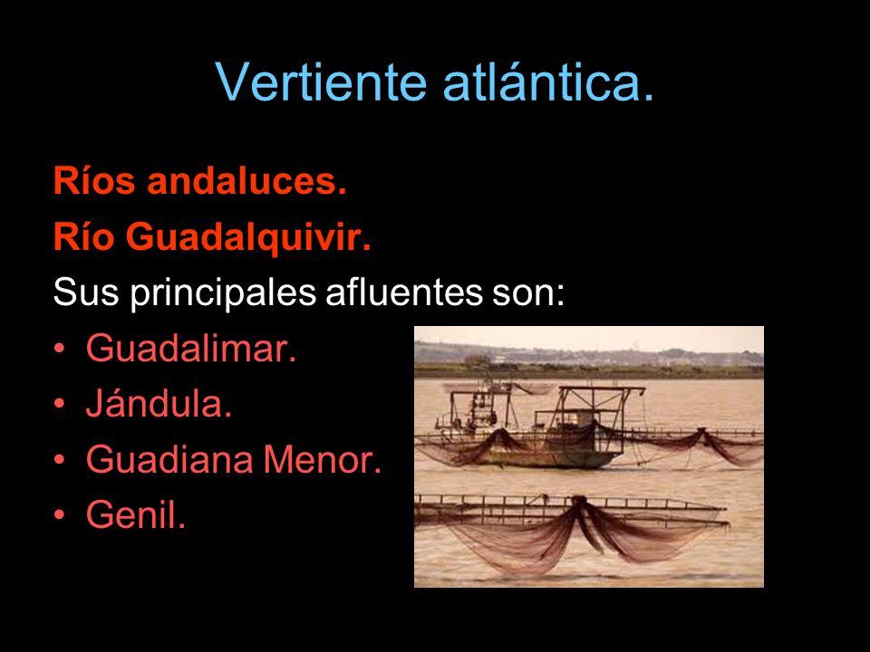 Ríos andaluces. Río Guadalquivir. Sus principales afluentes son: Guadalimar. Jándula. Guadiana Menor. Genil.