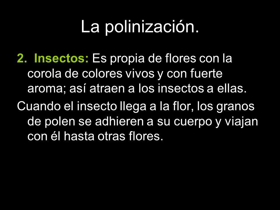 2. Insectos: Es propia de flores con la corola de colores vivos y con fuerte aroma; así atraen a los insectos a ellas. Cuando el insecto llega a la fl