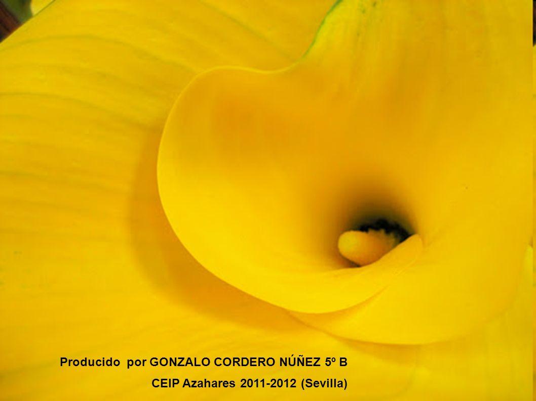 Producido por GONZALO CORDERO NÚÑEZ 5º B CEIP Azahares 2011-2012 (Sevilla)