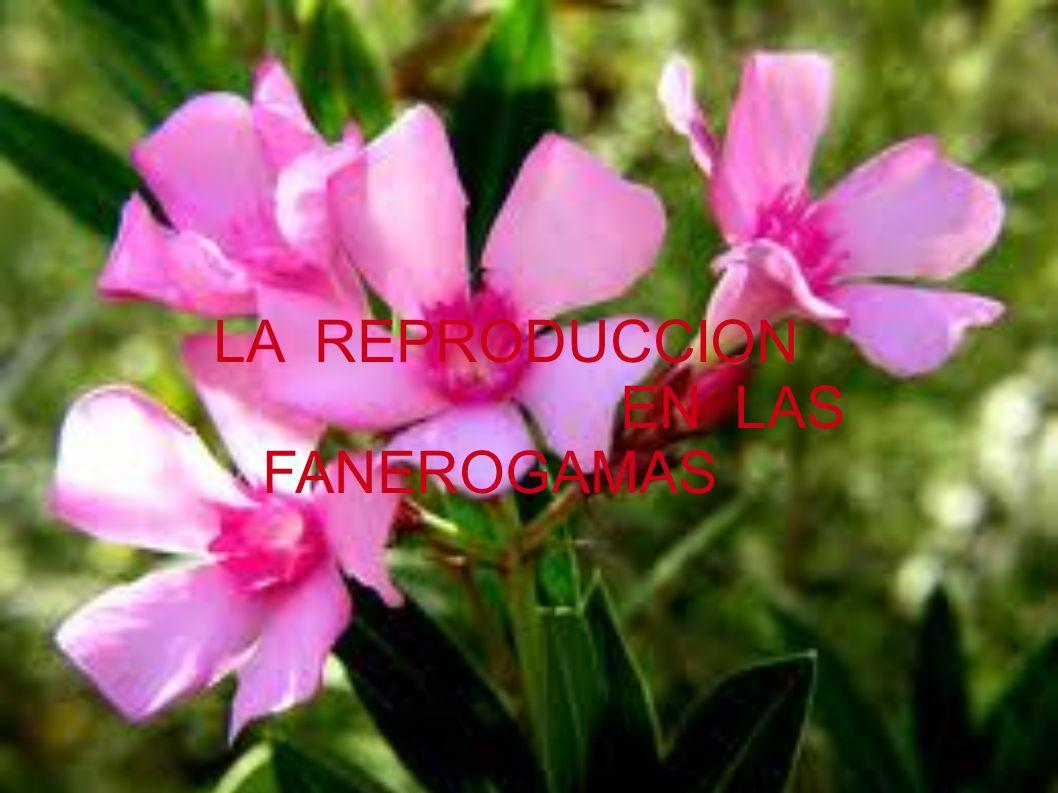 LAS FLORES Hay muchos tipos de flores.