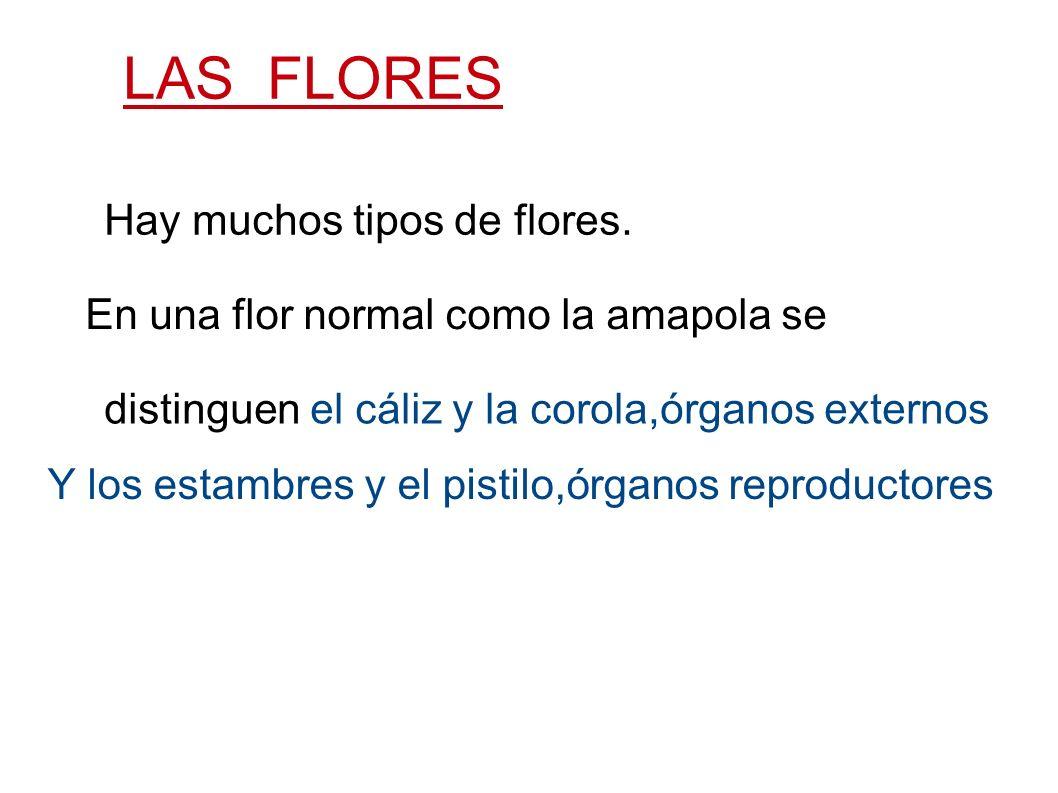 LAS FLORES Hay muchos tipos de flores. En una flor normal como la amapola se distinguen el cáliz y la corola,órganos externos Y los estambres y el pis