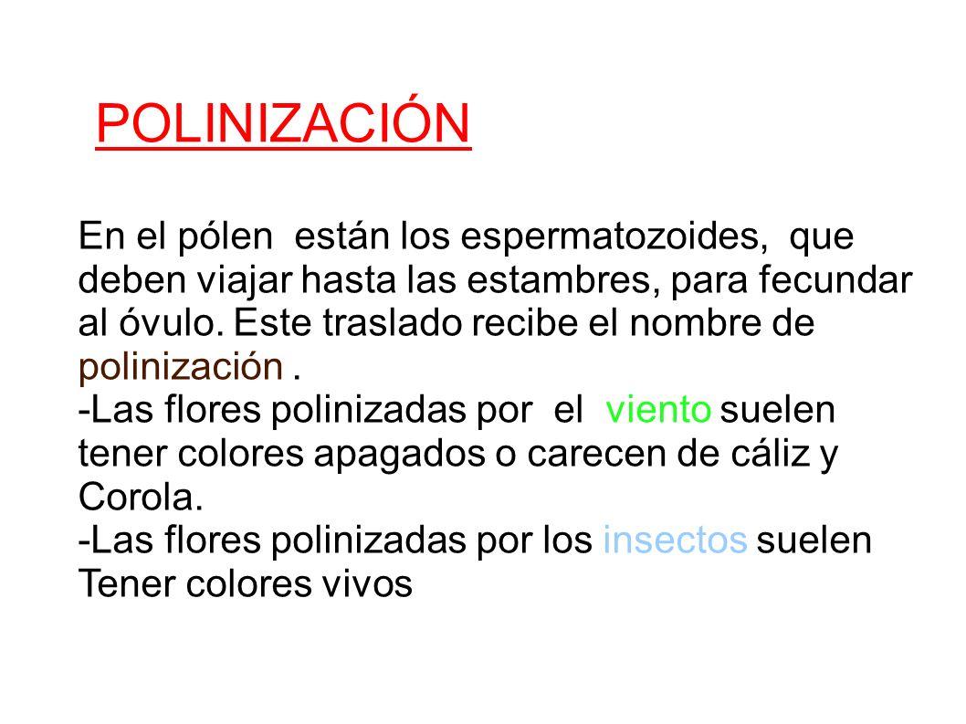 POLINIZACIÓN En el pólen están los espermatozoides, que deben viajar hasta las estambres, para fecundar al óvulo. Este traslado recibe el nombre de po