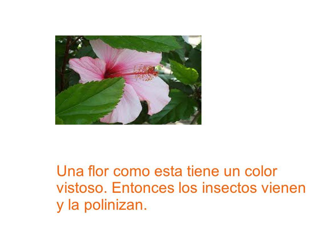 Una flor como esta tiene un color vistoso. Entonces los insectos vienen y la polinizan.