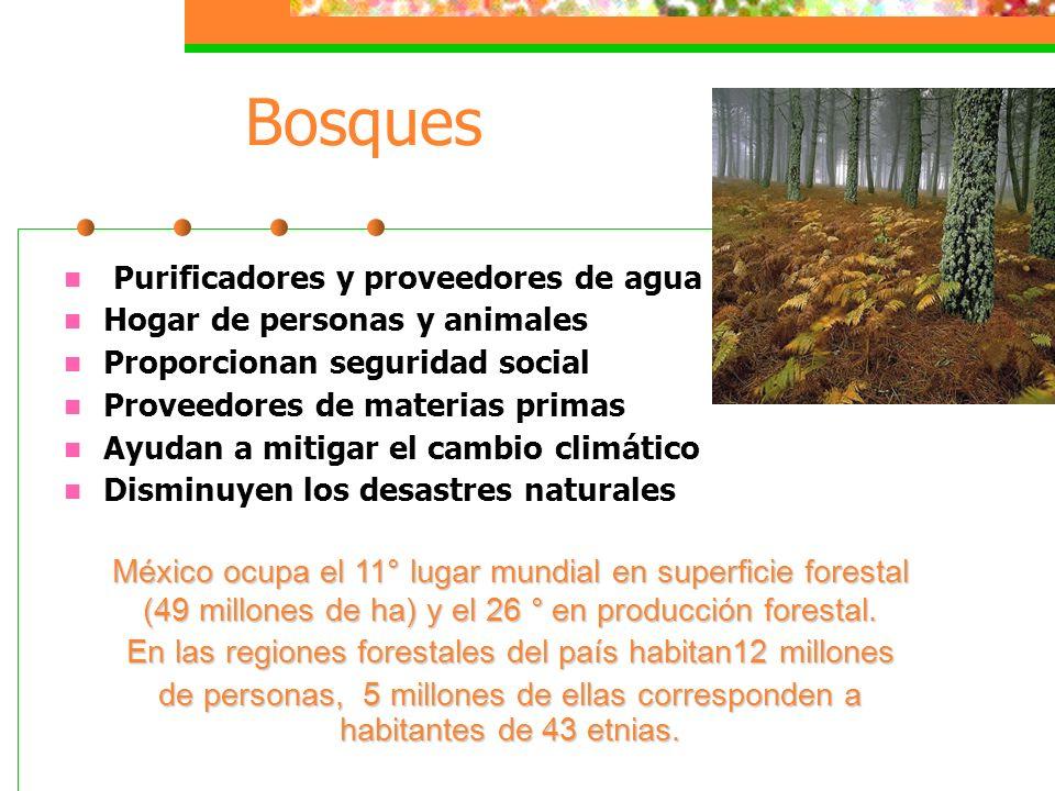 Agua potable, alcantarillado y saneamiento El suministro de estos servicios lo realizan los municipios. 12 millones de habitantes carecen de agua pota