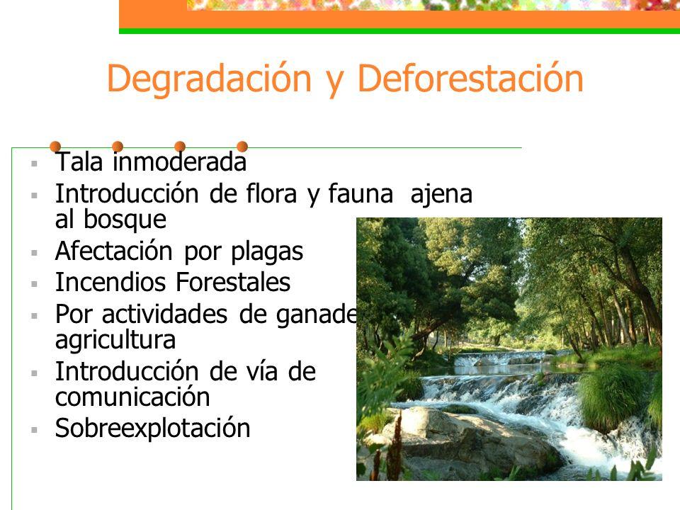 Bosques México ocupa el 11° lugar mundial en superficie forestal (49 millones de ha) y el 26 ° en producción forestal. En las regiones forestales del