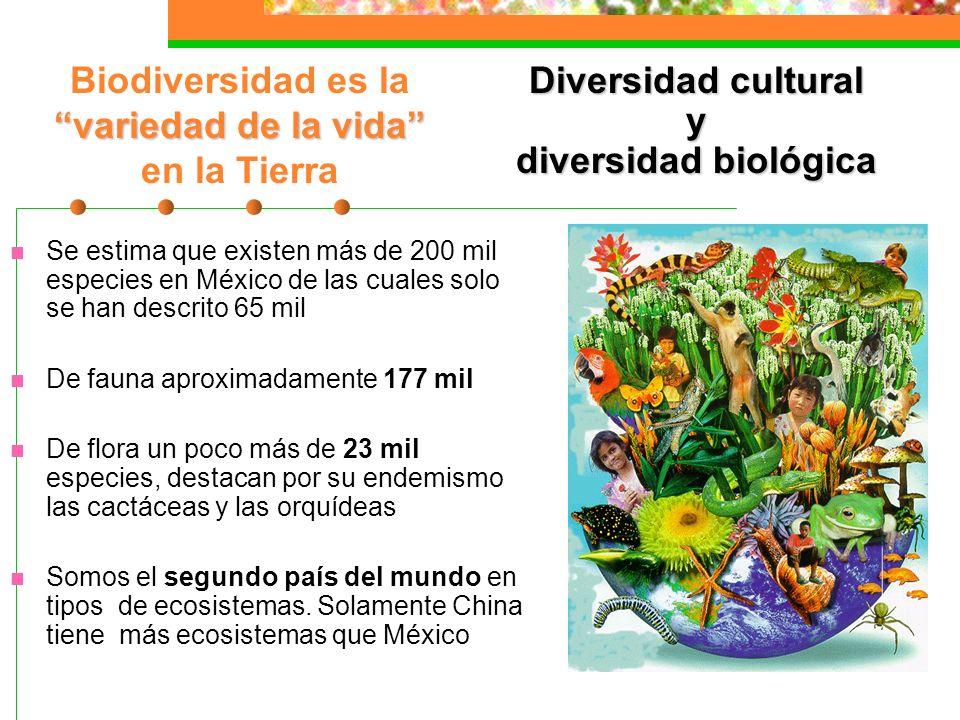 Biodiversidad El 10% de la biodiversidad de especies en el mundo se encuentra en el territorio mexicano México junto con Colombia Indonesia, Brasil, I