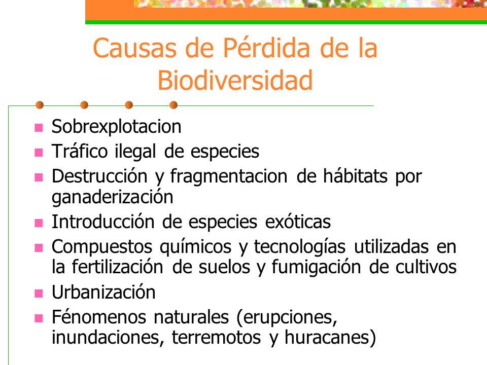 variedad de la vida Biodiversidad es la variedad de la vida en la Tierra Se estima que existen más de 200 mil especies en México de las cuales solo se