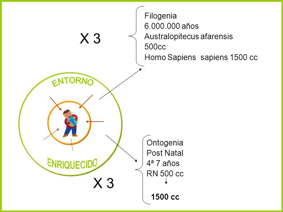 Filogenia 6.000.000 años Australopitecus afarensis 500cc Homo Sapiens sapiens 1500 cc X 3 Ontogenia Post Natal 4ª 7 años RN 500 cc X 3 1500 cc