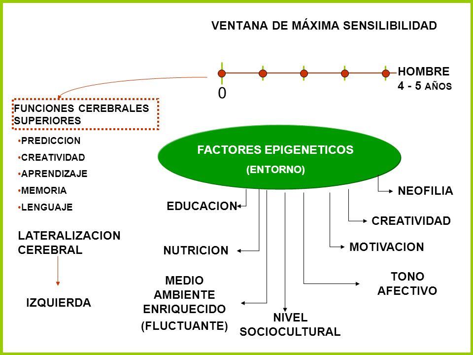 VENTANA DE MÁXIMA SENSILIBILIDAD 0 HOMBRE 4 - 5 AÑOS FACTORES EPIGENETICOS (ENTORNO) NEOFILIA CREATIVIDAD MOTIVACION TONO AFECTIVO NIVEL SOCIOCULTURAL
