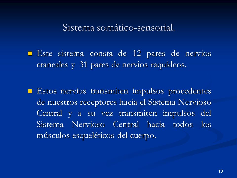 10 Sistema somático-sensorial. Este sistema consta de 12 pares de nervios craneales y 31 pares de nervios raquídeos. Este sistema consta de 12 pares d