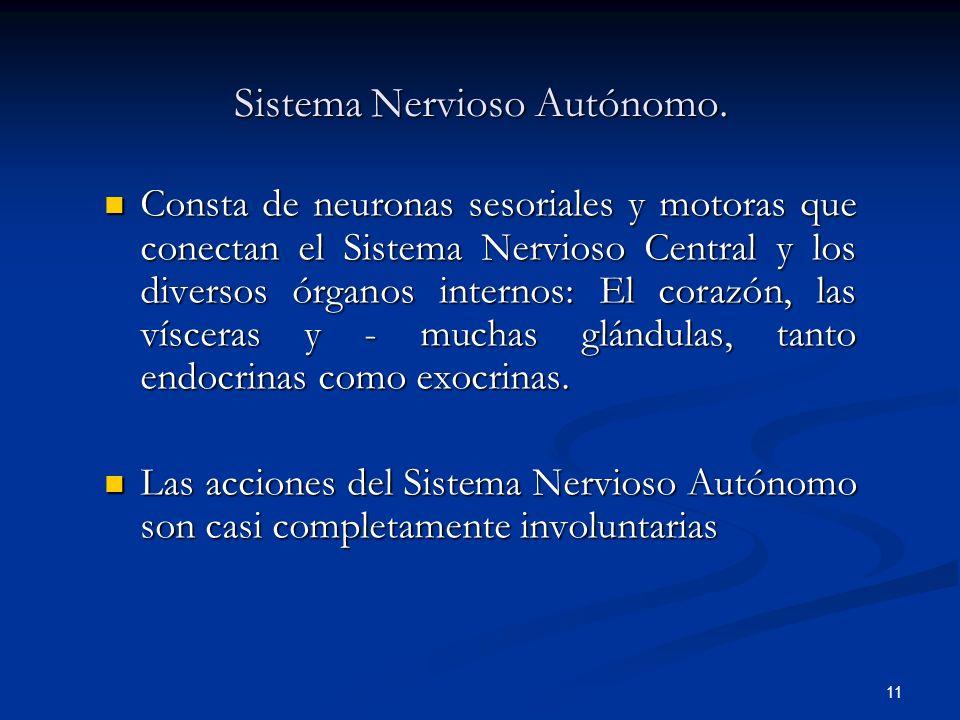 11 Sistema Nervioso Autónomo. Consta de neuronas sesoriales y motoras que conectan el Sistema Nervioso Central y los diversos órganos internos: El cor