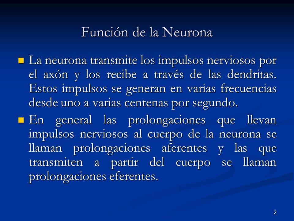 2 Función de la Neurona La neurona transmite los impulsos nerviosos por el axón y los recibe a través de las dendritas. Estos impulsos se generan en v