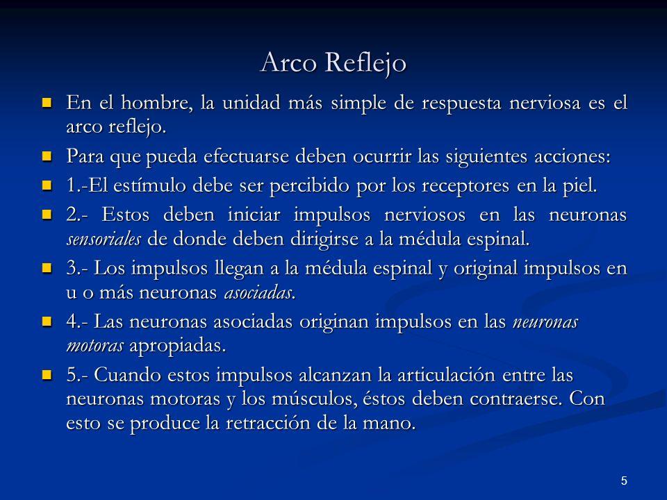 5 Arco Reflejo En el hombre, la unidad más simple de respuesta nerviosa es el arco reflejo. En el hombre, la unidad más simple de respuesta nerviosa e