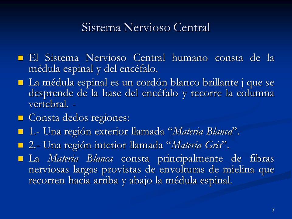 7 Sistema Nervioso Central El Sistema Nervioso Central humano consta de la médula espinal y del encéfalo. El Sistema Nervioso Central humano consta de