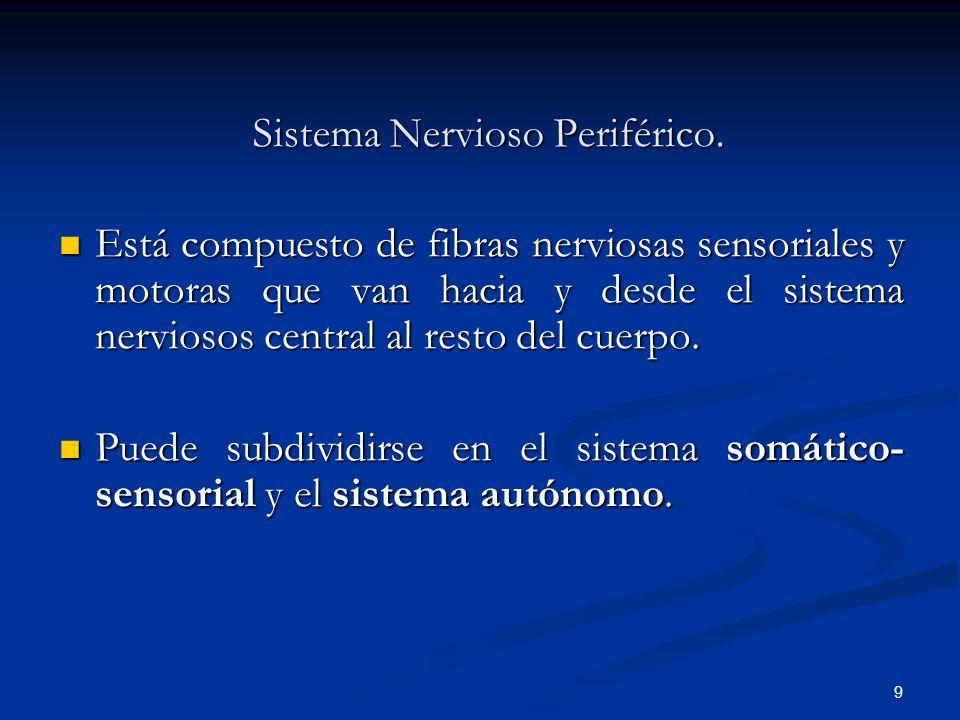 9 Sistema Nervioso Periférico. Está compuesto de fibras nerviosas sensoriales y motoras que van hacia y desde el sistema nerviosos central al resto de