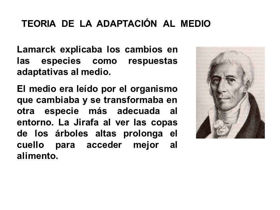 Lamarck explicaba los cambios en las especies como respuestas adaptativas al medio. El medio era leído por el organismo que cambiaba y se transformaba