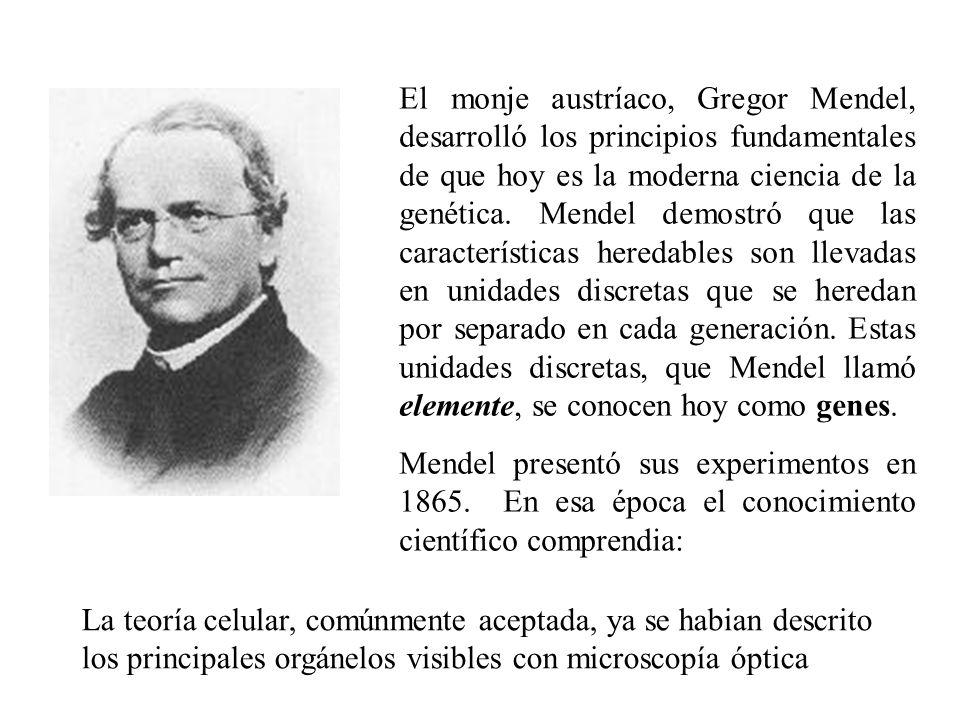El monje austríaco, Gregor Mendel, desarrolló los principios fundamentales de que hoy es la moderna ciencia de la genética. Mendel demostró que las ca