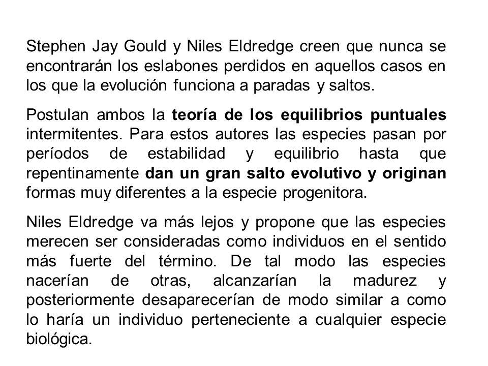 Stephen Jay Gould y Niles Eldredge creen que nunca se encontrarán los eslabones perdidos en aquellos casos en los que la evolución funciona a paradas