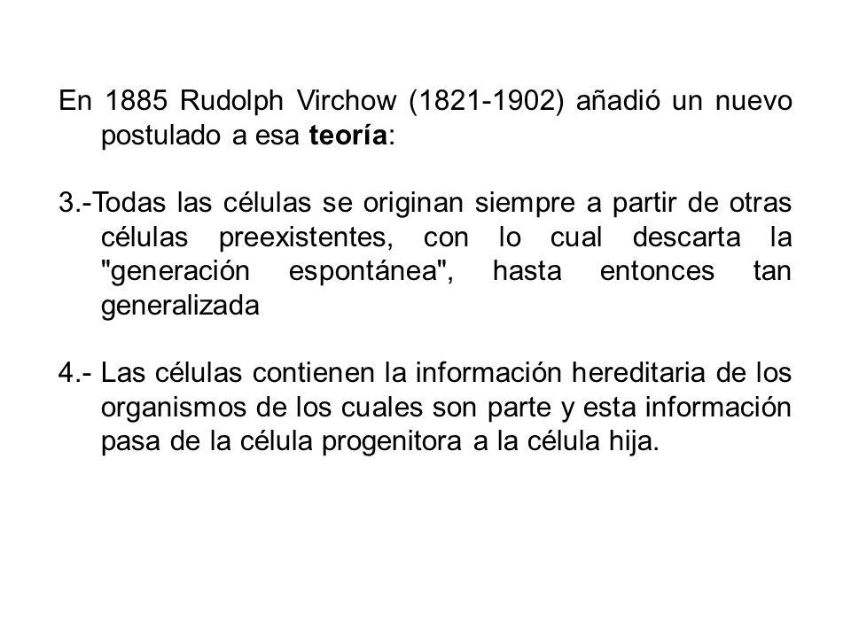 En 1885 Rudolph Virchow (1821-1902) añadió un nuevo postulado a esa teoría: 3.-Todas las células se originan siempre a partir de otras células preexis