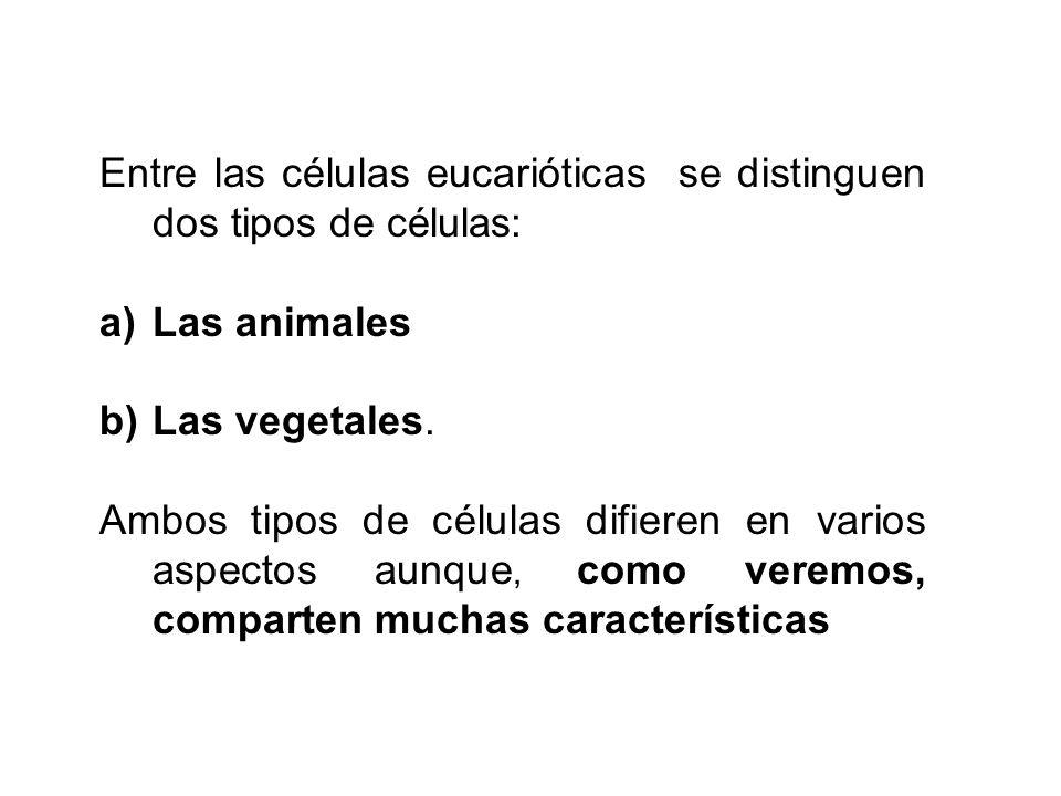 Entre las células eucarióticas se distinguen dos tipos de células: a)Las animales b)Las vegetales. Ambos tipos de células difieren en varios aspectos