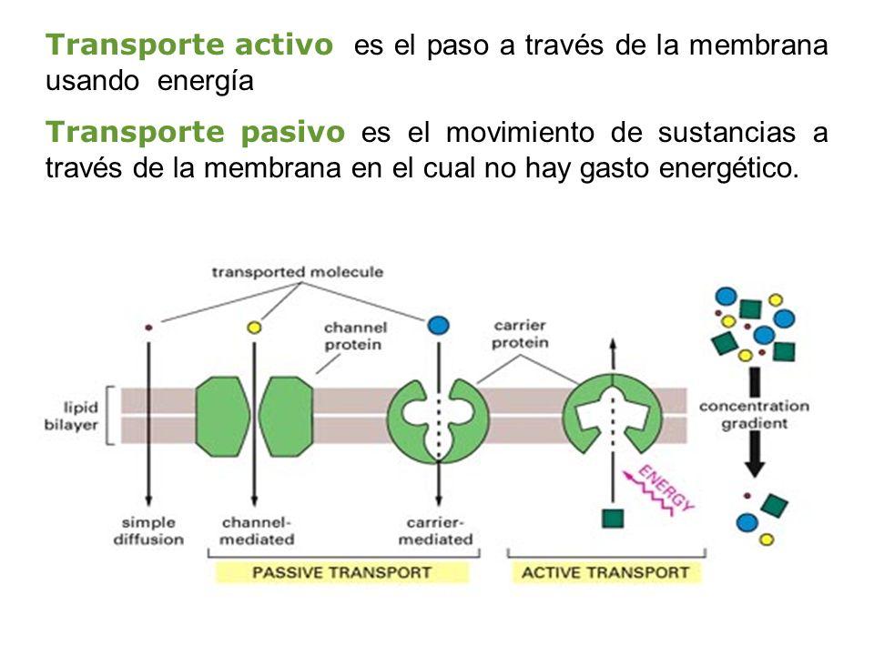 Transporte activo es el paso a través de la membrana usando energía Transporte pasivo es el movimiento de sustancias a través de la membrana en el cua