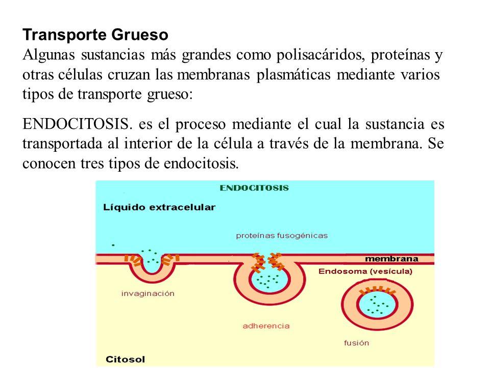 ENDOCITOSIS. es el proceso mediante el cual la sustancia es transportada al interior de la célula a través de la membrana. Se conocen tres tipos de en