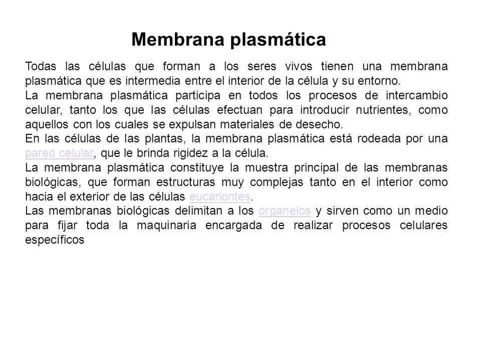 Membrana plasmática Todas las células que forman a los seres vivos tienen una membrana plasmática que es intermedia entre el interior de la célula y s