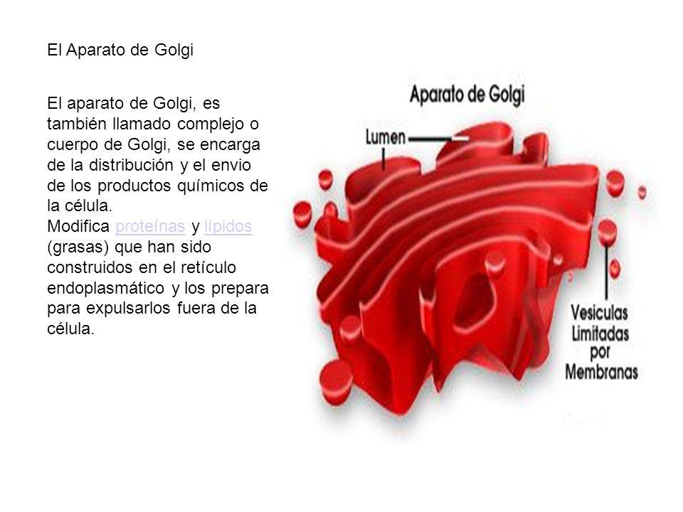 El Aparato de Golgi El aparato de Golgi, es también llamado complejo o cuerpo de Golgi, se encarga de la distribución y el envio de los productos quím