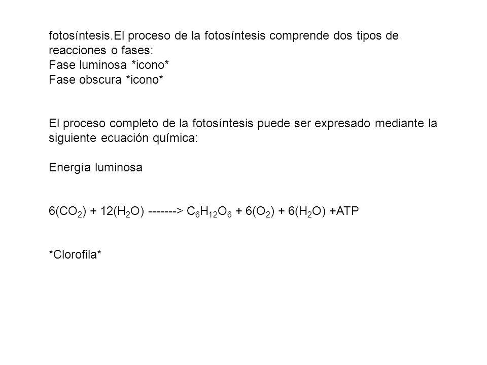 fotosíntesis.El proceso de la fotosíntesis comprende dos tipos de reacciones o fases: Fase luminosa *icono* Fase obscura *icono* El proceso completo d