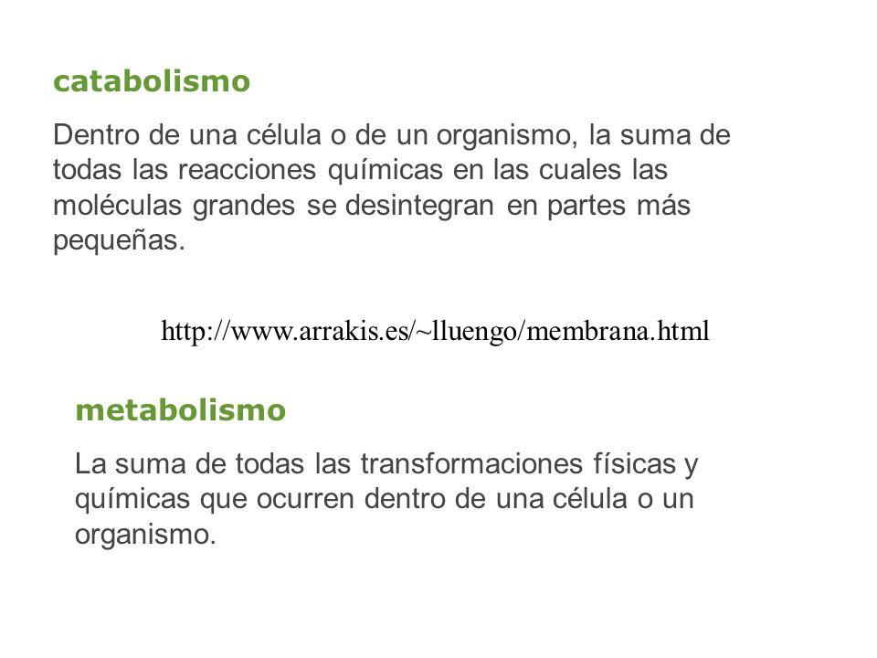 http://www.arrakis.es/~lluengo/membrana.html catabolismo Dentro de una célula o de un organismo, la suma de todas las reacciones químicas en las cuale