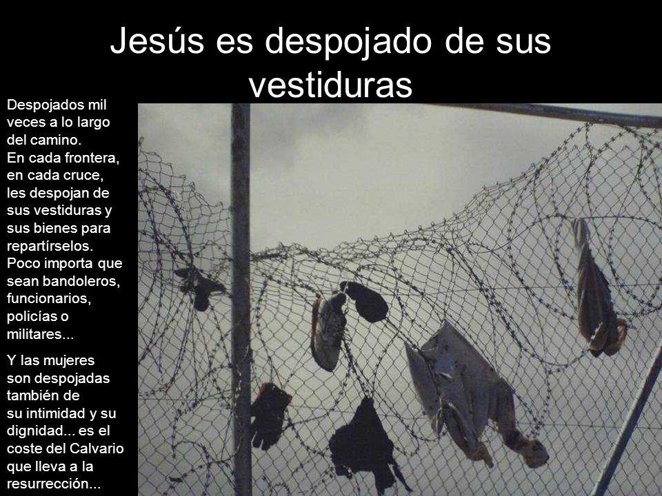 Jesús es despojado de sus vestiduras Despojados mil veces a lo largo del camino.