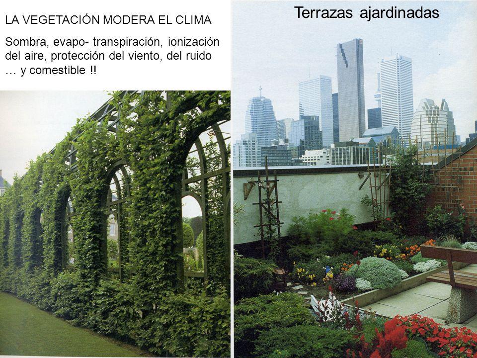 Terrazas ajardinadas LA VEGETACIÓN MODERA EL CLIMA Sombra, evapo- transpiración, ionización del aire, protección del viento, del ruido … y comestible