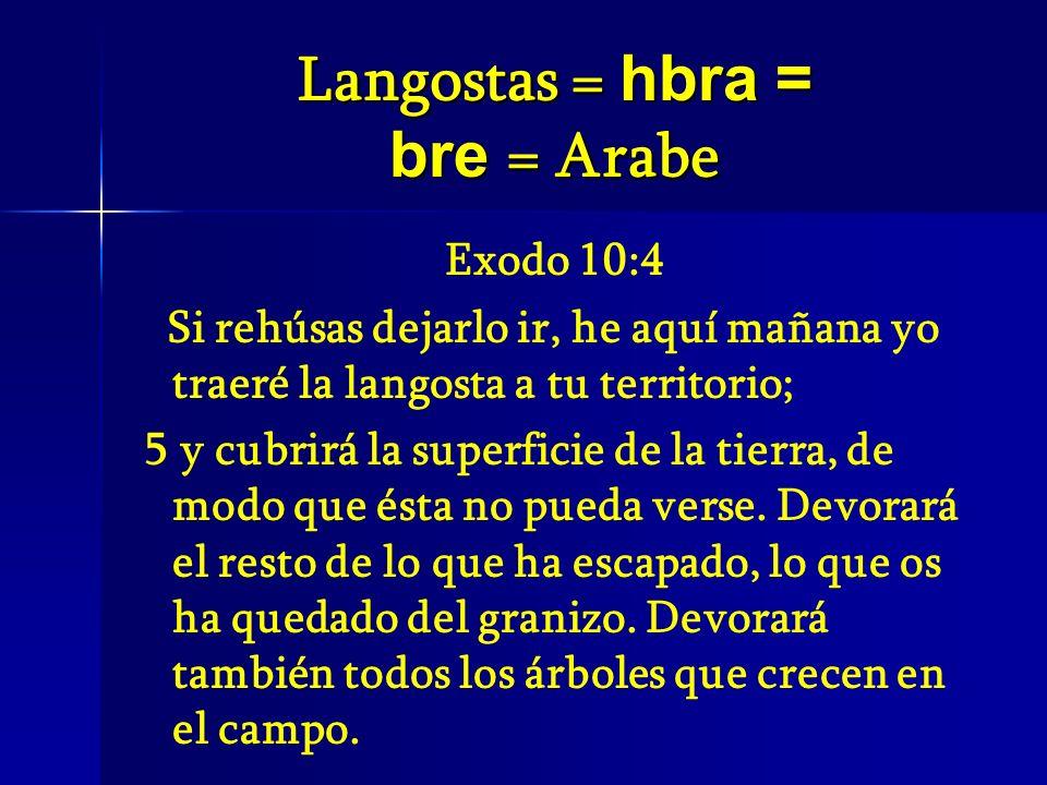 Langostas = hbra = bre = Arabe Exodo 10:4 Si rehúsas dejarlo ir, he aquí mañana yo traeré la langosta a tu territorio; 5 y cubrirá la superficie de la