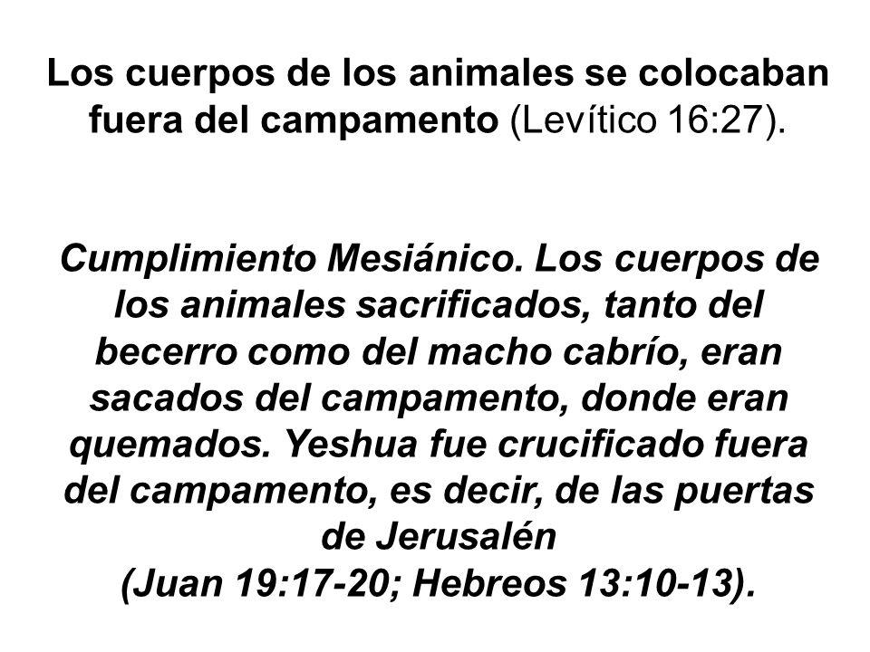 Los cuerpos de los animales se colocaban fuera del campamento (Levítico 16:27). Cumplimiento Mesiánico. Los cuerpos de los animales sacrificados, tant