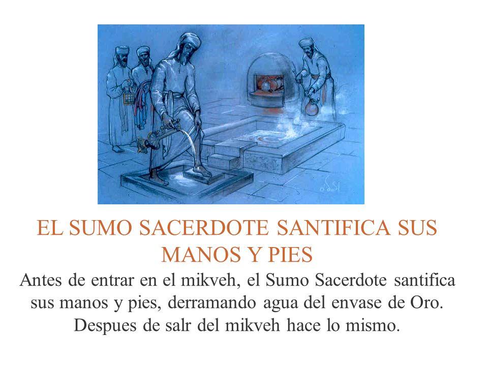 EL SUMO SACERDOTE SANTIFICA SUS MANOS Y PIES Antes de entrar en el mikveh, el Sumo Sacerdote santifica sus manos y pies, derramando agua del envase de
