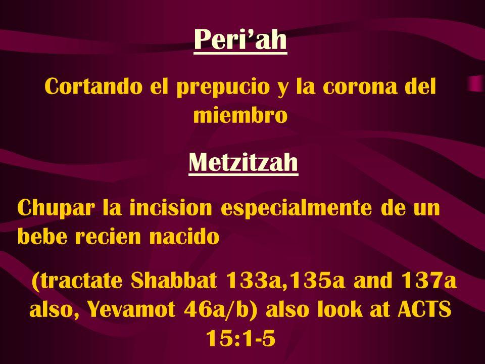 Periah Cortando el prepucio y la corona del miembro Metzitzah Chupar la incision especialmente de un bebe recien nacido (tractate Shabbat 133a,135a an